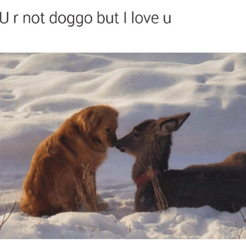 doggo and deer meme