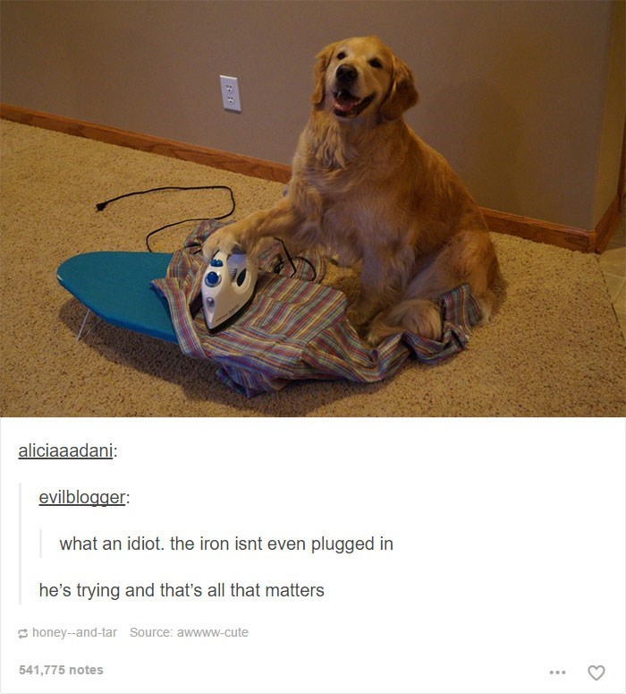 dog meme of pupper trying to iron