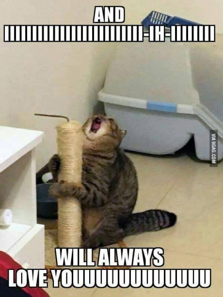 cat meme of trying to sing whiney houston