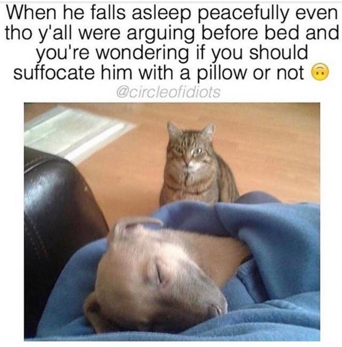 cute animal meme of cat imagining killing the dog with a pillow