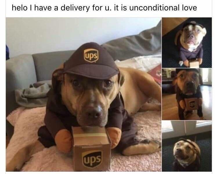 ups dog meme