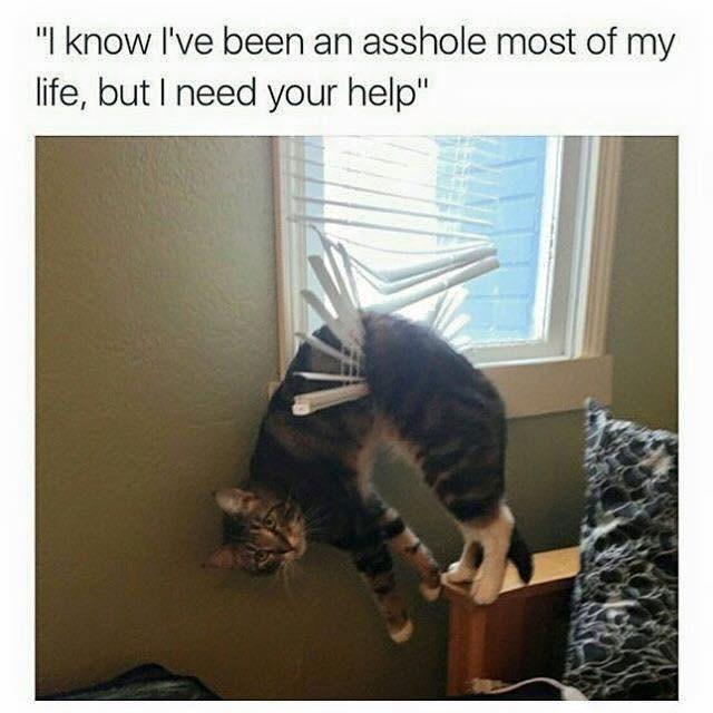 cat trouble meme