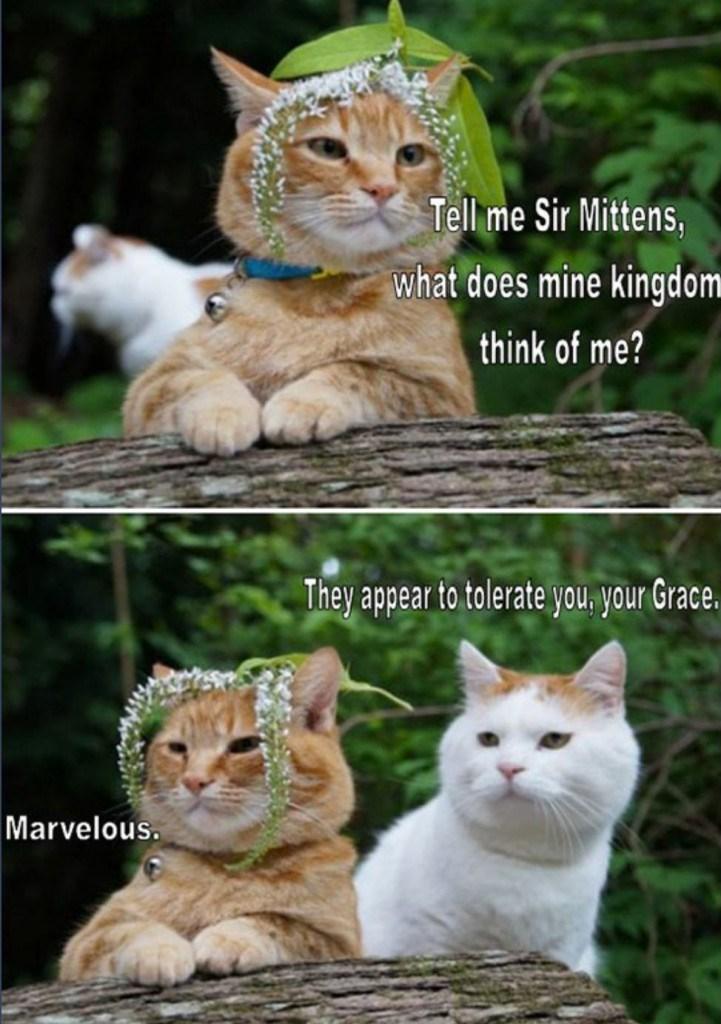 cat meme of royal meows