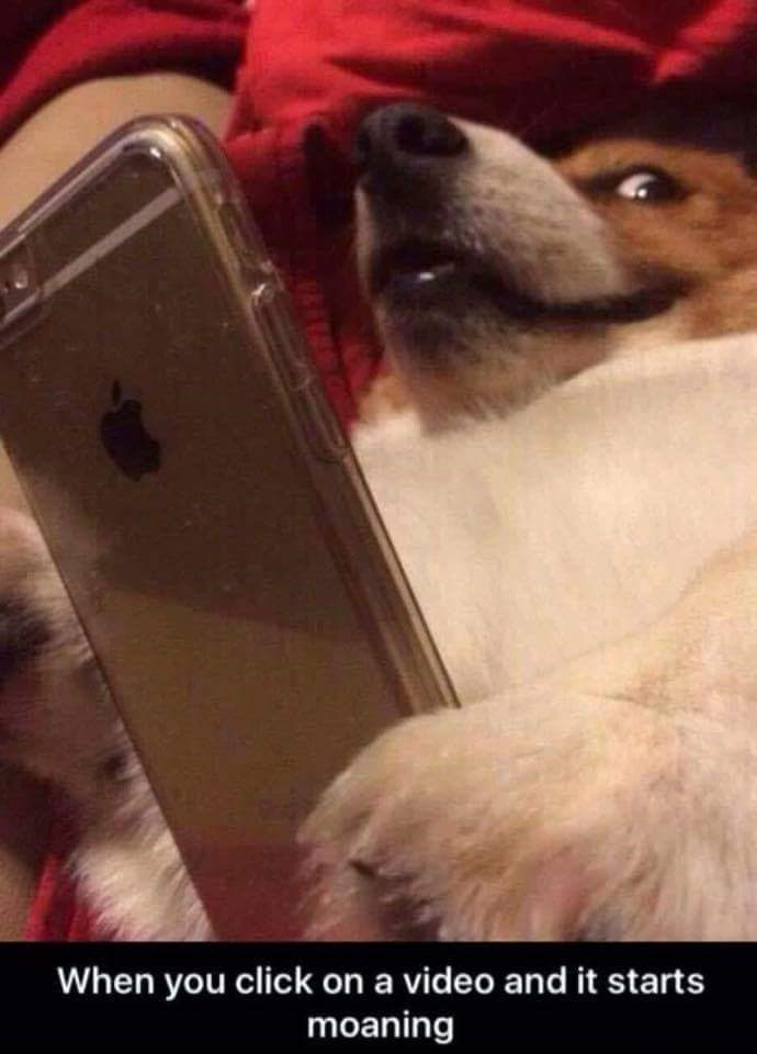 dog meme of when you click on a video and it makes moaning sound