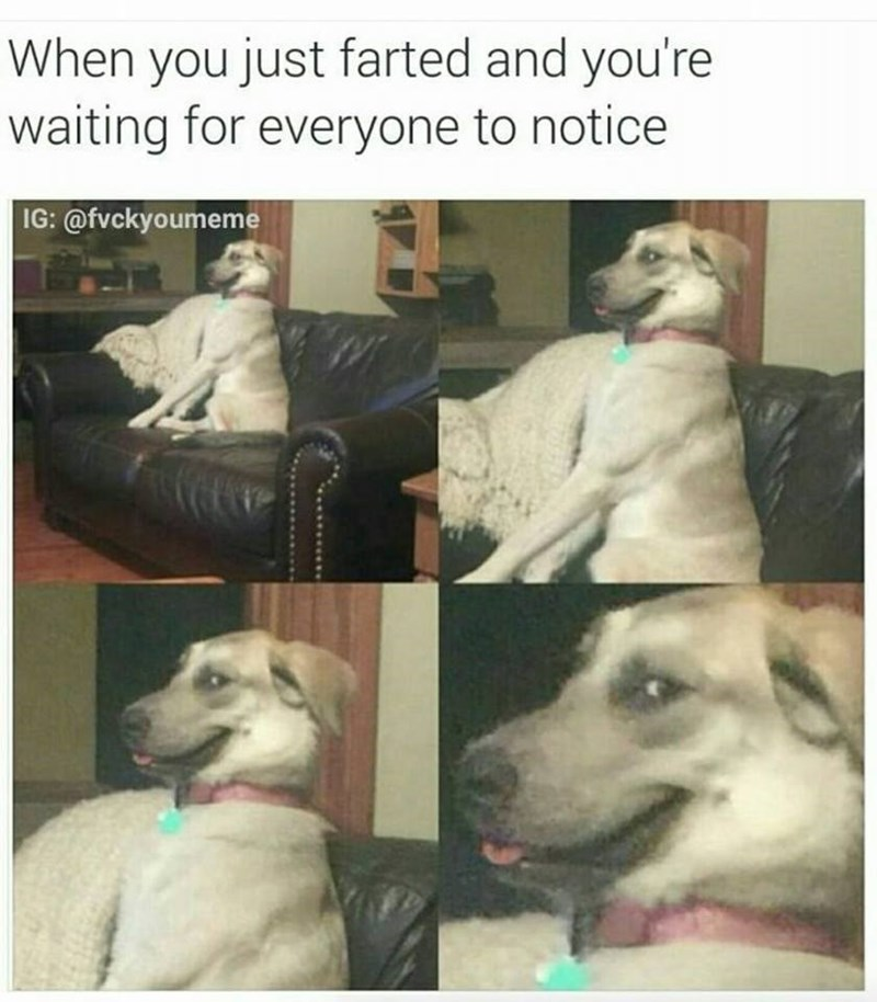 dog meme about farting