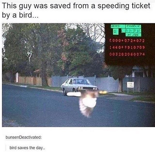 Mode of transport - This guy was saved from a speeding ticket by a bird... SMARLE E2252 2 E000 072 072 14400910709 003282060074 7 bunsenDeactivated: bird saves the day.