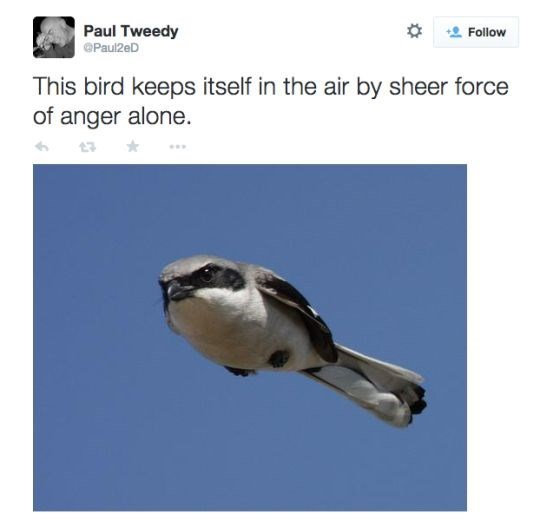 Bird - Paul Tweedy Follow @Paul2eD This bird keeps itself in the air by sheer force of anger alone.