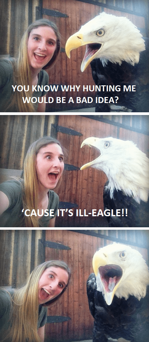 Photo caption - YOU KNOW WHY HUNTING ME WOULD BE A BAD IDEA? CAUSE IT'S ILL-EAGLE!!