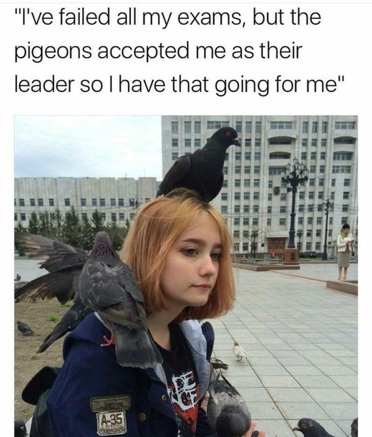 """Selfie - """"I've failed all my exams, but the pigeons accepted me as their leader so I have that going for me"""" A-35"""