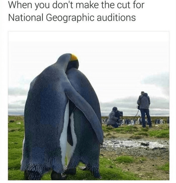 Penguin - When you don't make the cut for National Geographic auditions