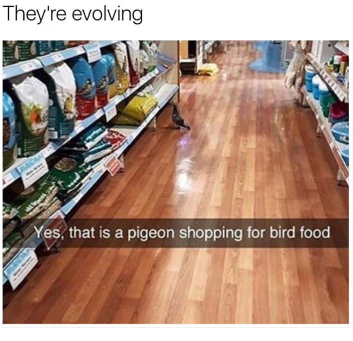 Floor - They're evolving Yes, that is a pigeon shopping for bird food