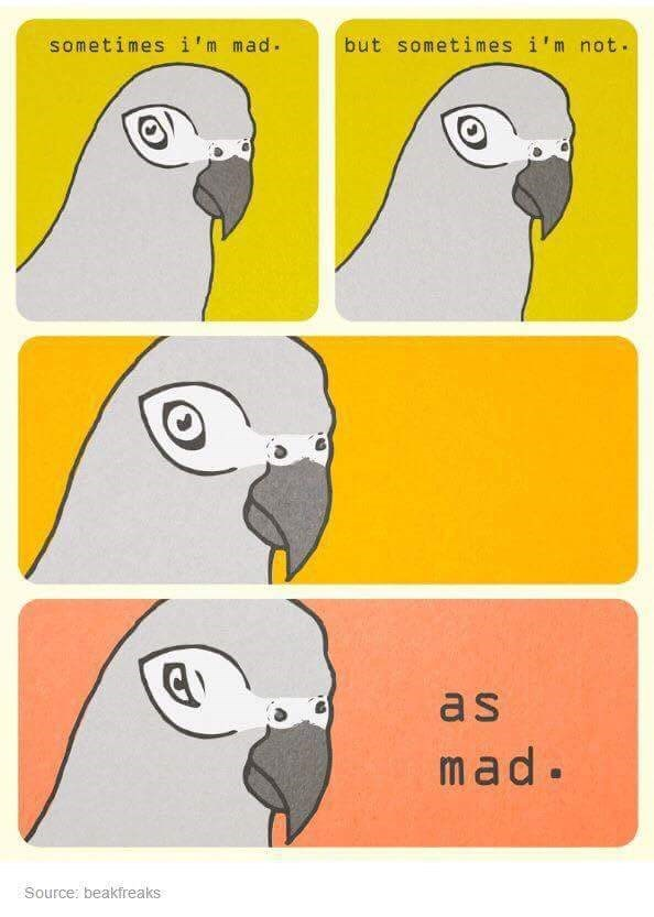 Bird - sometimes i'm mad. but sometimes i'm not. as mad. Source: beakfreaks