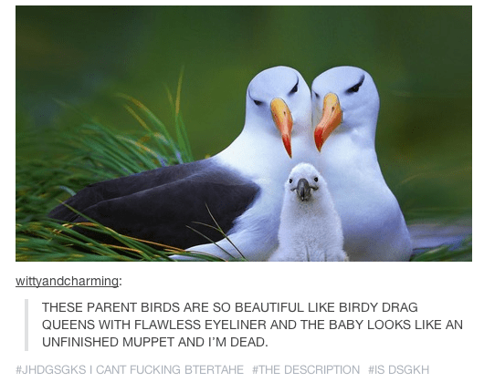 Bird - wittyandcharming: THESE PARENT BIRDS ARE SO BEAUTIFUL LIKE BIRDY DRAG QUEENS WITH FLAWLESS EYELINER AND THE BABY LOOKS LIKE AN UNFINISHED MUPPET AND I'M DEAD. #JHDGSGKS I CANT FUCKING BTERTAHE #THE DESCRIPTION #IS DSGKH
