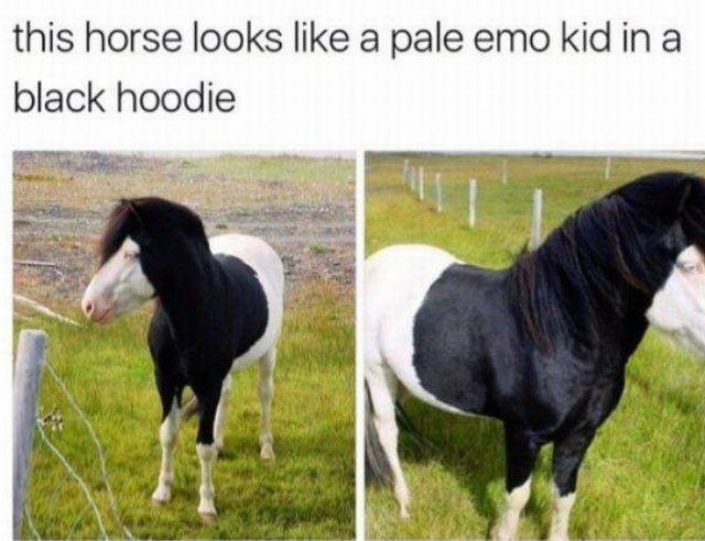 Memes - 9017133824