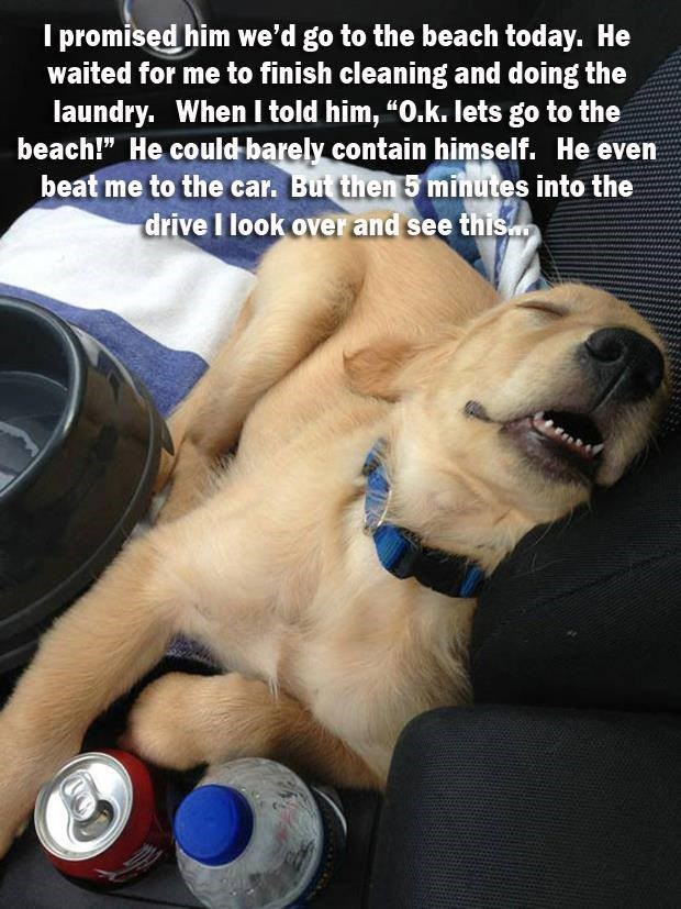 """Canidae - I promised him we'd go to the beach today, He waited for me to finish cleaning and doing the laundry. When I told him, """"O.k. lets go to the beach!"""" He could barely contain himself. He even beat me to the car. Bui then 5 minutes into the drive I look overand see this"""