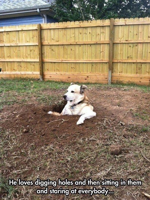 Mammal - He loves digging holes and then sittingfin them and staring at everybody