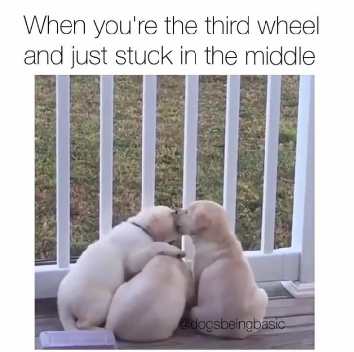 Text - When you're the third wheel and just stuck in the middle @dogsbeingbasic
