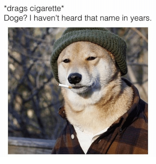 Canidae - *drags cigarette* Doge? I haven't heard that name in years.