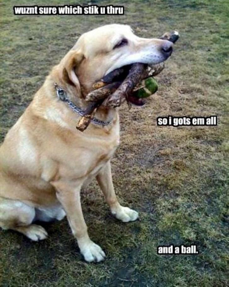 Dog - WUznt sure which stik u thru Soigots em all and a ball.