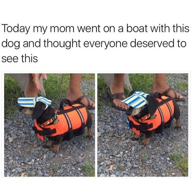 Lifejacket - Today my mom went on a boat with this dog and thought everyone deserved to see this
