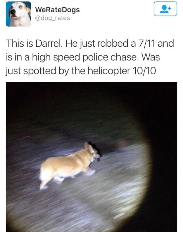 Canidae - WeRateDogs @dog_rates This is Darrel. He just robbed a 7/11 and is in a high speed police chase. Was just spotted by the helicopter 10/10