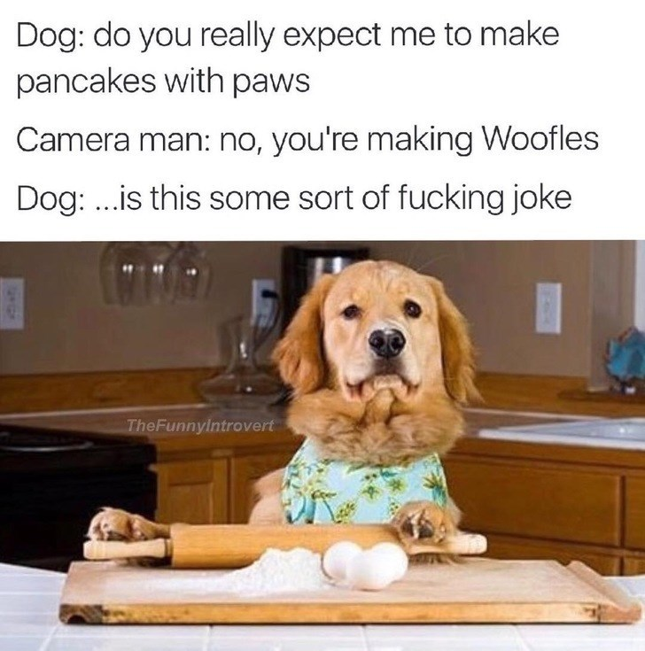 Dog - Dog: do you really expect me to make pancakes with paws Camera man: no, you're making Woofles Dog: ..is this some sort of fucking joke The Funnylntrovert