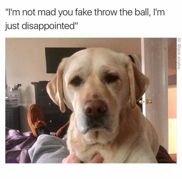 """Dog - """"I'm not mad you fake throw the ball, I'm just disappointed"""" IG: @tank.sinatra"""