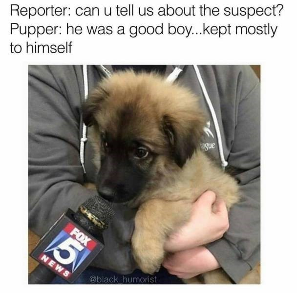 Dog - Reporter: can u tell us about the suspect? Pupper: he was a good boy...kept mostly to himself FOX 5 NEWS @black humorist