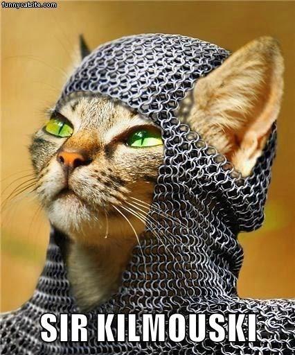 cat caption sir kilmouski - 9017422336