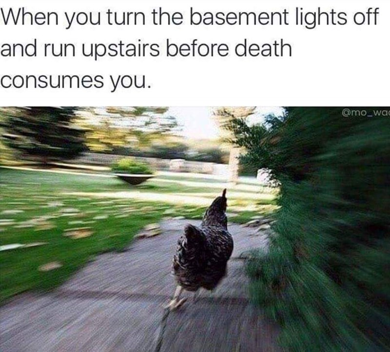 Bird - When you turn the basement lights off and run upstairs before death consumes you @mo_wac