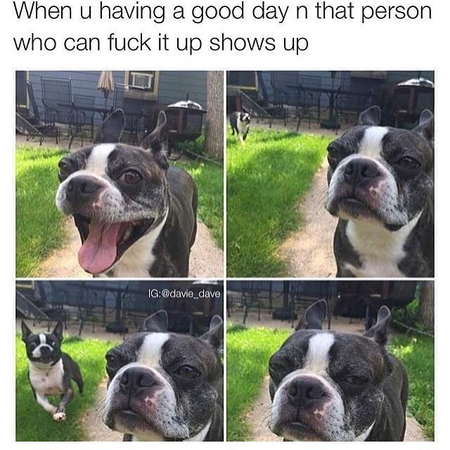 Dog - When u having a good day n that person who can fuck it up shows up IG:@davie_dave