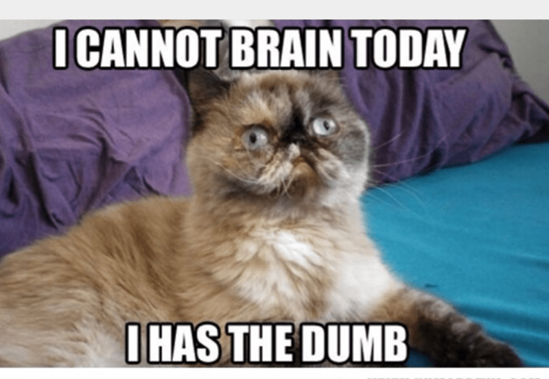 Cat - I CANNOT BRAIN TODAY IHAS THE DUMB