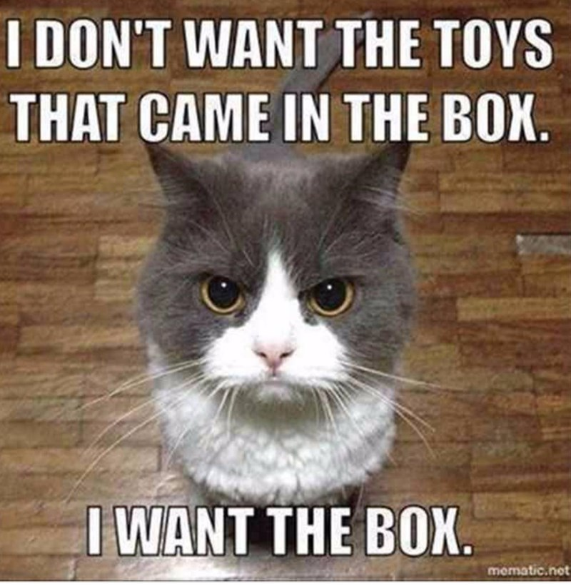 Cat - I DON'T WANT THE TOYS THAT CAME IN THE BOX IWANT THE BOX. mematic.not