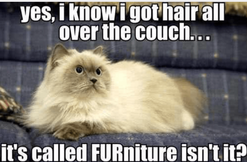 Cat - yes, i know igothair all over the couch.. it's called FURniture isn't it?