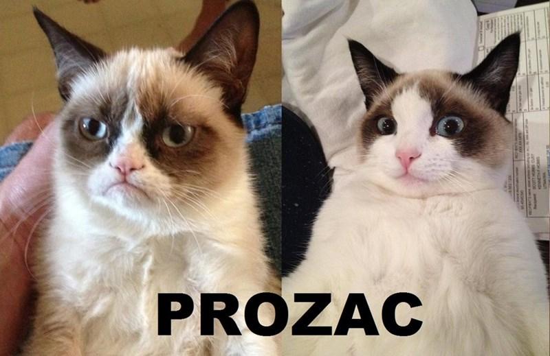Cat - PROZAC