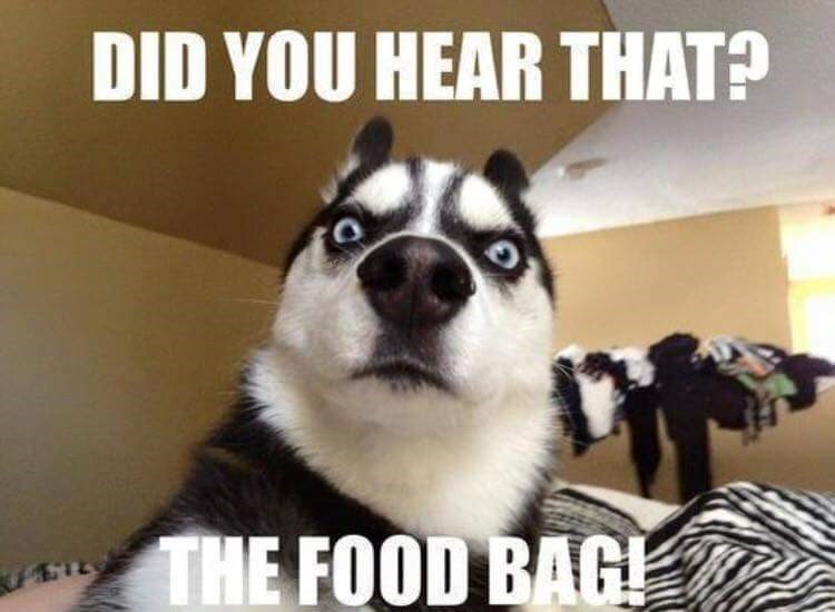 Mammal - DID YOU HEAR THAT? THE FOOD BAG