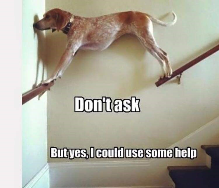 Dog - Don'task Butyes,Icould use some help