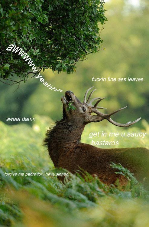 Wildlife - awwwww.yeah fuckin fine ass leaves sweet damn get in me u saucy bastards forgive me padre for i have sinned