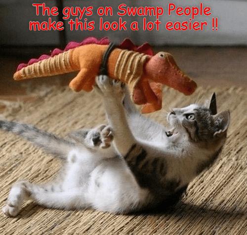 plush toy alligators cat memes - 9017521664