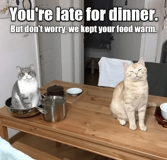 Funny picture and meme of cats keeping your food warm for you out of the kindness of their hearts.