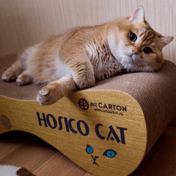 Hosico - Cat - avt CARTON www.artcarton.nu HOSICO CAT