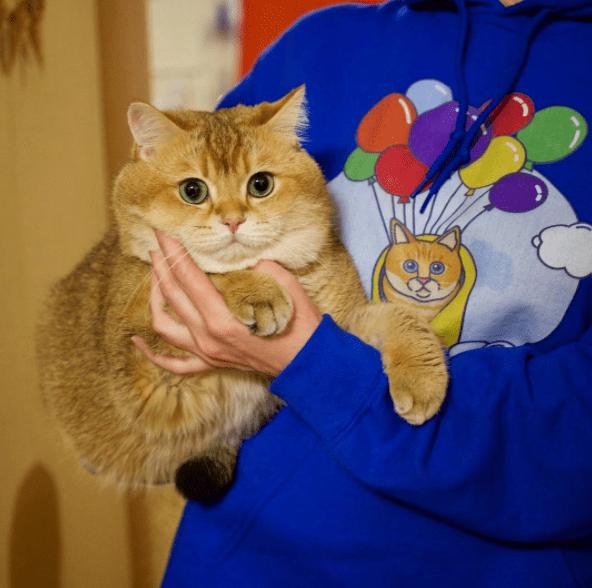 Hosico - Cat