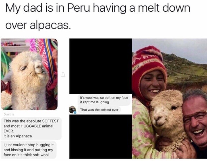wholesome meme - Adaptation - My dad is in Peru having a melt down over alpacas. CDC It's wool was so soft on my face it kept me laughing That was the softest ever Dimitris This was the absolute SOFTEST and most HUGGABLE animal EVER it is an Alpahaca just couldn't stop hugging it and kissing it and putting my face on it's thick soft wool