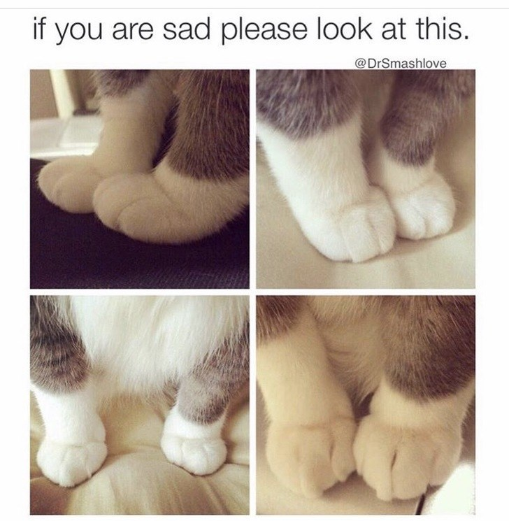 wholesome meme - Fur - if you are sad please look at this. @DrSmashlove