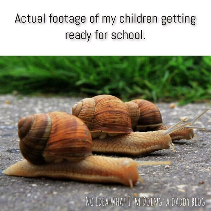 Snails and slugs - Actual footage of my children getting ready for school. No IDEA WHATI M DOING: A DADDY BLOG