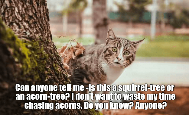 cat,time,squirrel,waste,tree,caption,acorn