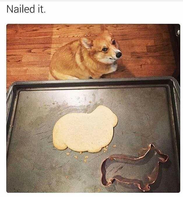 Memes doggo - 9018178304