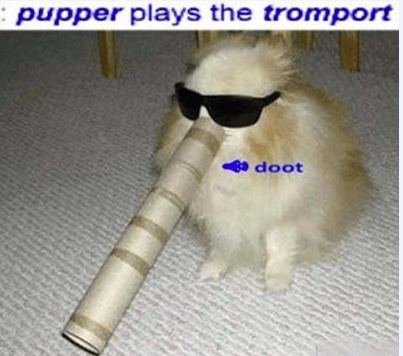 Fur - pupper plays the tromport doot