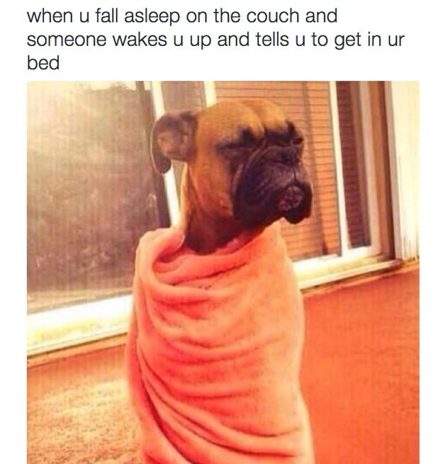 Dog - when u fall asleep on the couch and someone wakes u up and tells u to get in ur bed