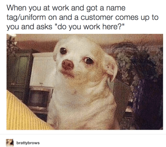"""Dog - When you at work and got a name tag/uniform on and a customer comes up to you and asks """"do you work here?"""" brattybrows"""